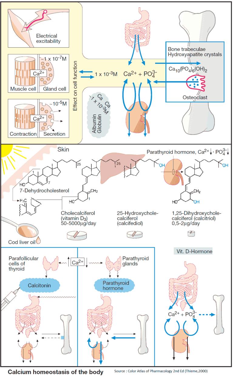 Drugs for Maintaining Calcium Homeostasis