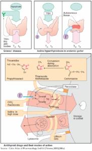 Hyperthyroidism and Antithyroid Drugs