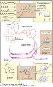 Antibiotics acting on DNA