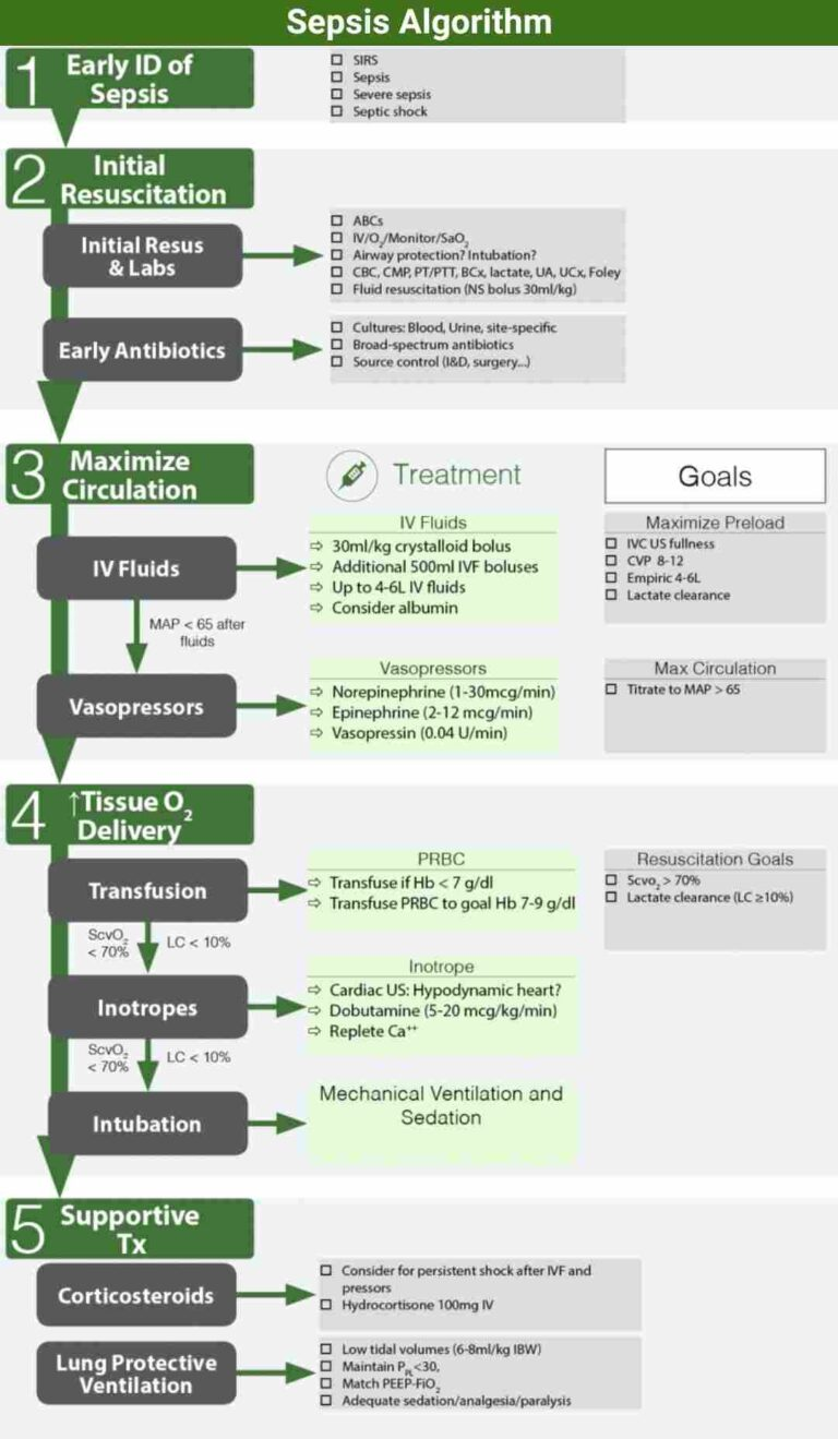 Sepsis Algorithm and Differential Diagnosis