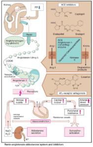 Inhibitors of the Renin Angiotensin Aldosteron System