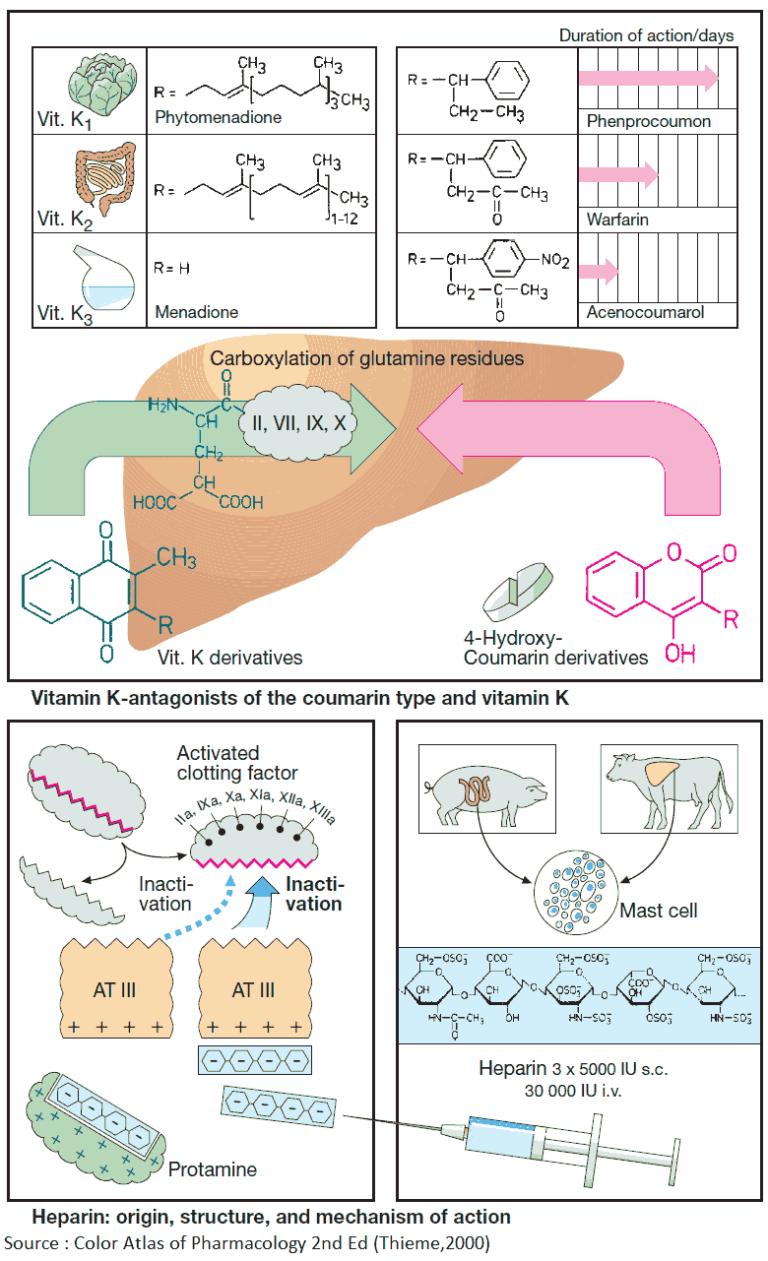 Anticoagulants and Fibrinolytics