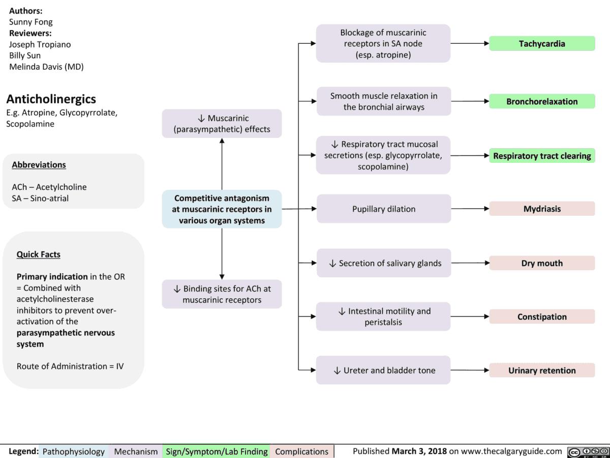 Anticholinergics (parasympatholytics) Effects