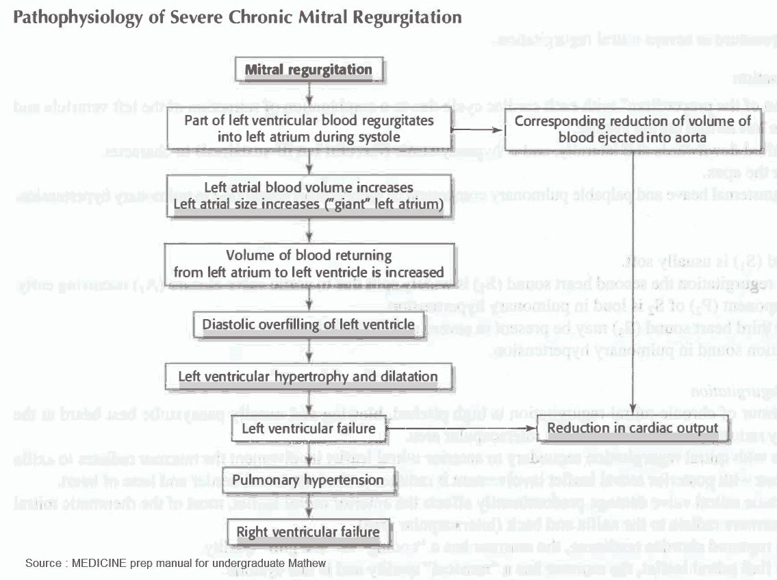 Pathophysiology of Severe Chronic Mitral Regurgitation